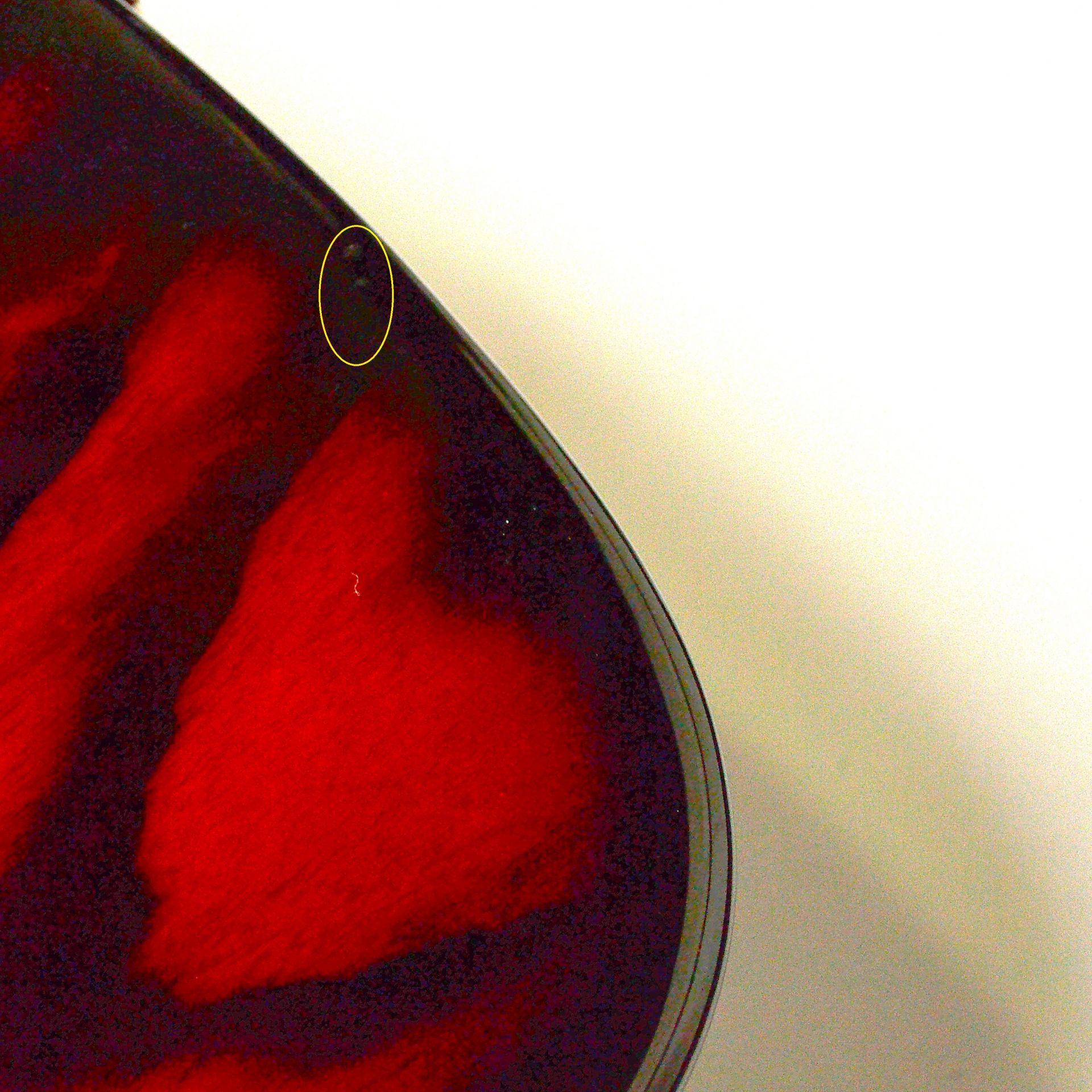 WL5DX-ASH Burnerの全体画像(縦)