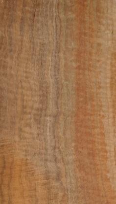 walnut1
